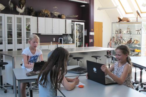Læringsrummet er indrettet efter de aktiviteter der skal foregå i rummet