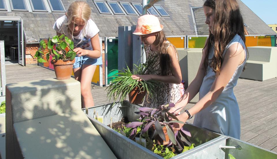 når planterne vokser til vil de fungere som afskærmning mellem arbejdspladserne