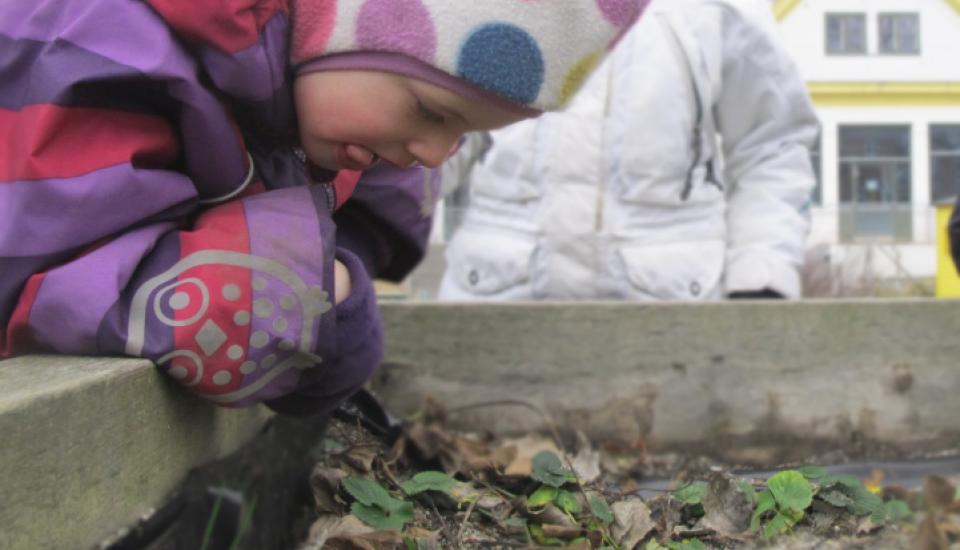 Plantekasserne bringer lugte-, smags- og synssansen i spil